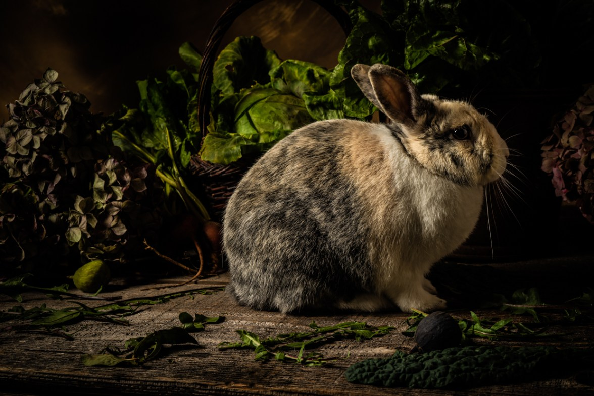 Rabbit © Barbara Moon Babtista