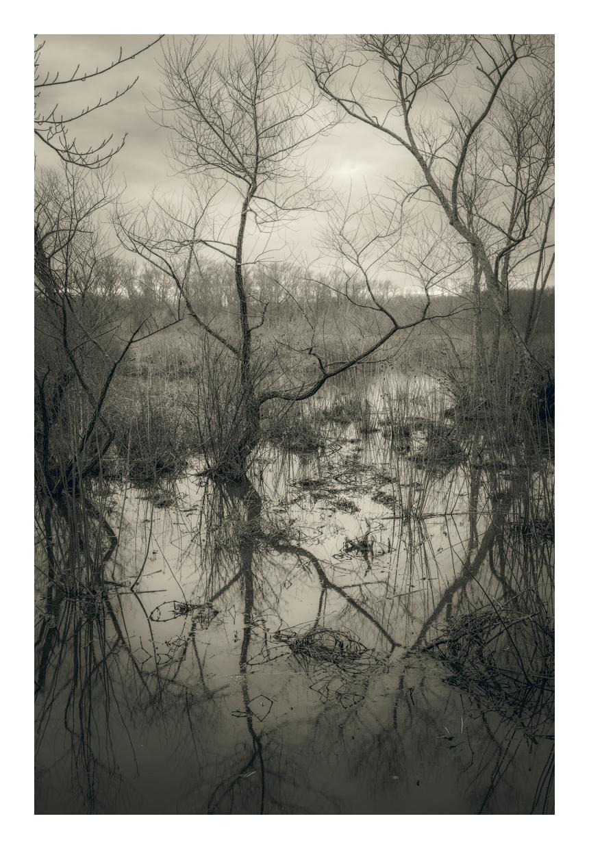 Tuckahoe © Mark Muse
