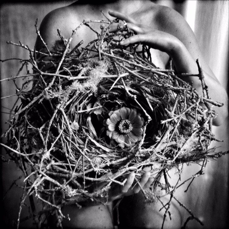 The Nest © Rachael Short