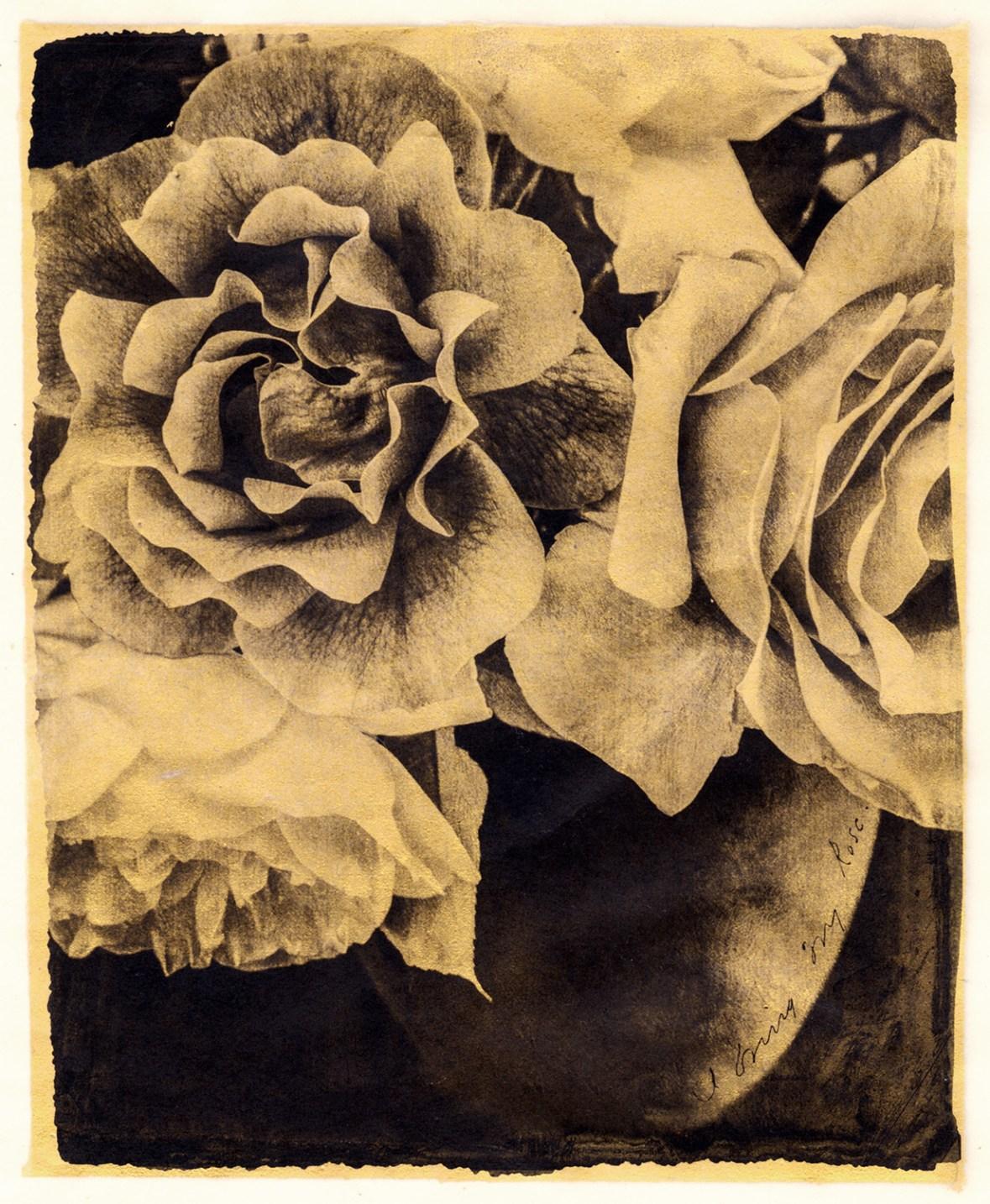 I Bring My Rose © Brigitte Carnochan