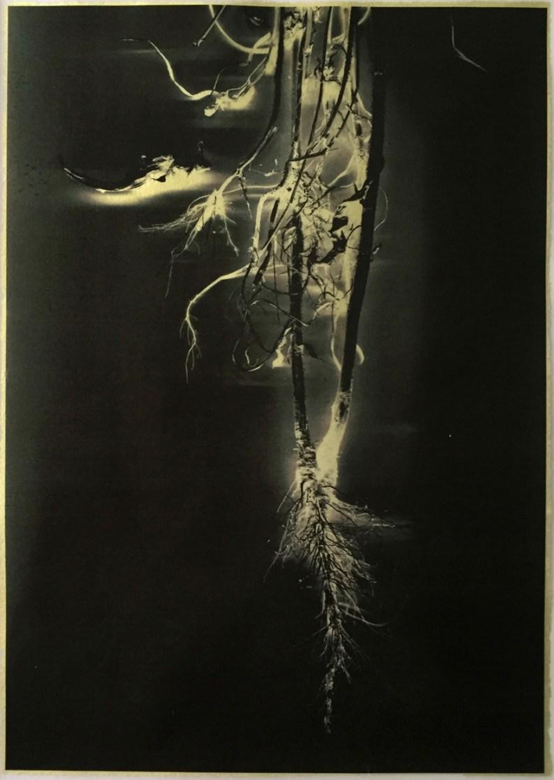 Lightning Roots © Marcy Palmer