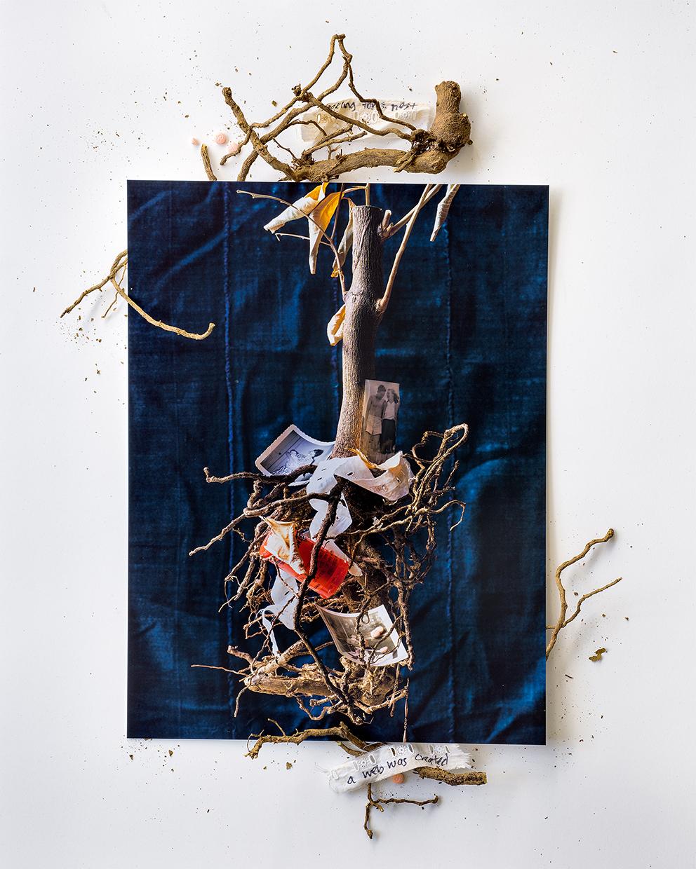 Entanglements © Beth Galton