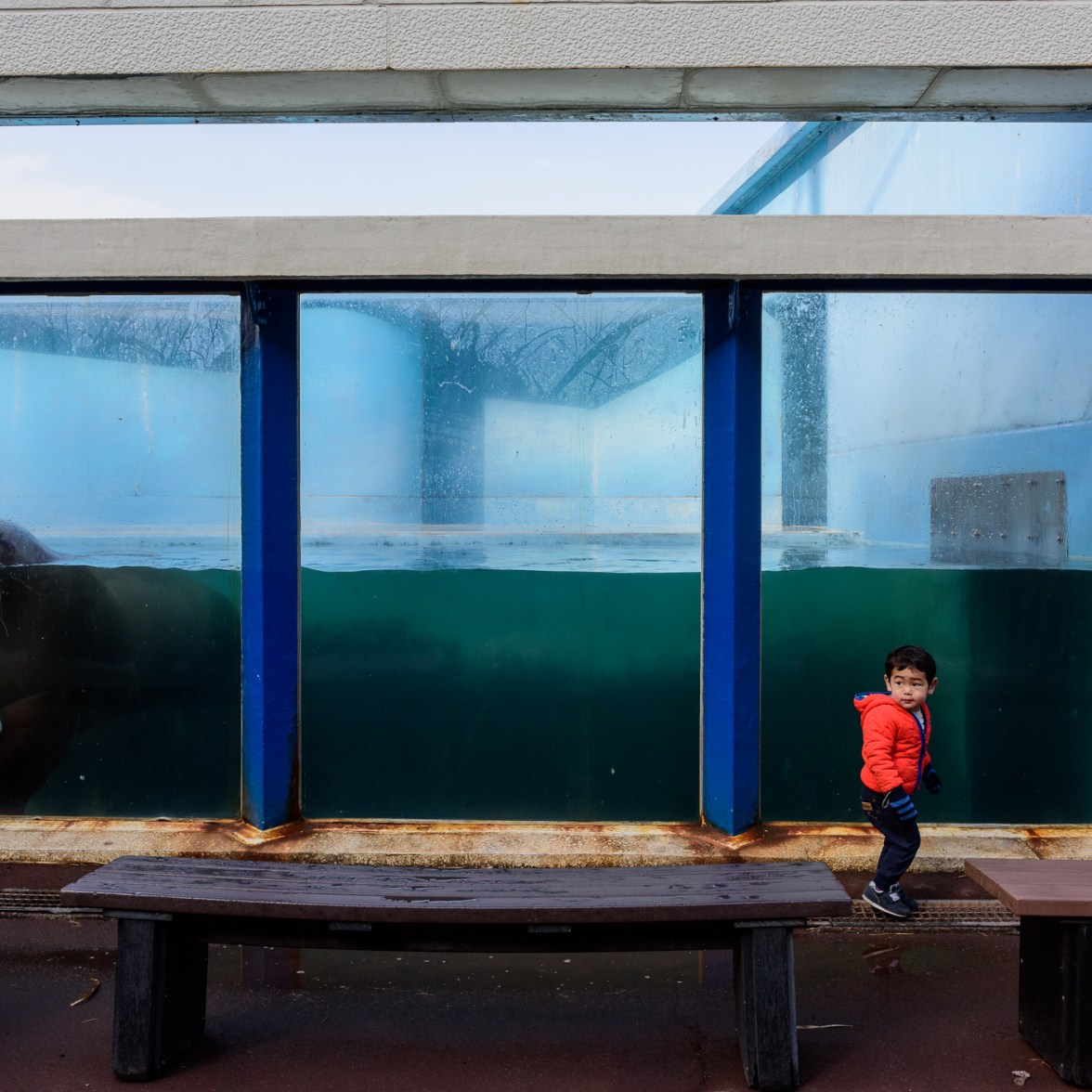 Boy and Walrus © George Nobechi