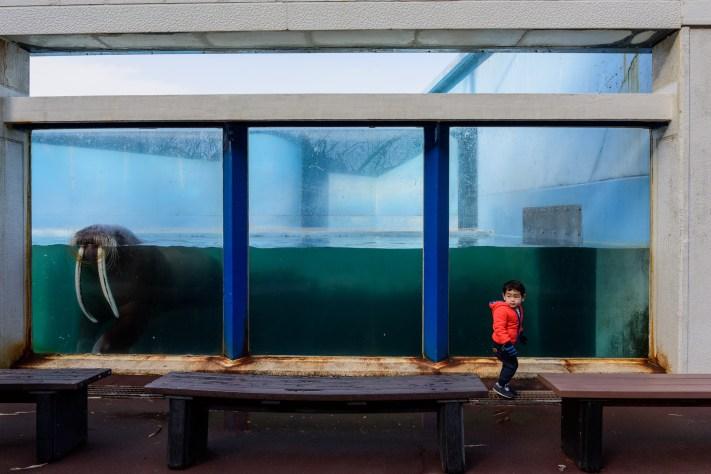 Boy and Walrus ©George Nobechi