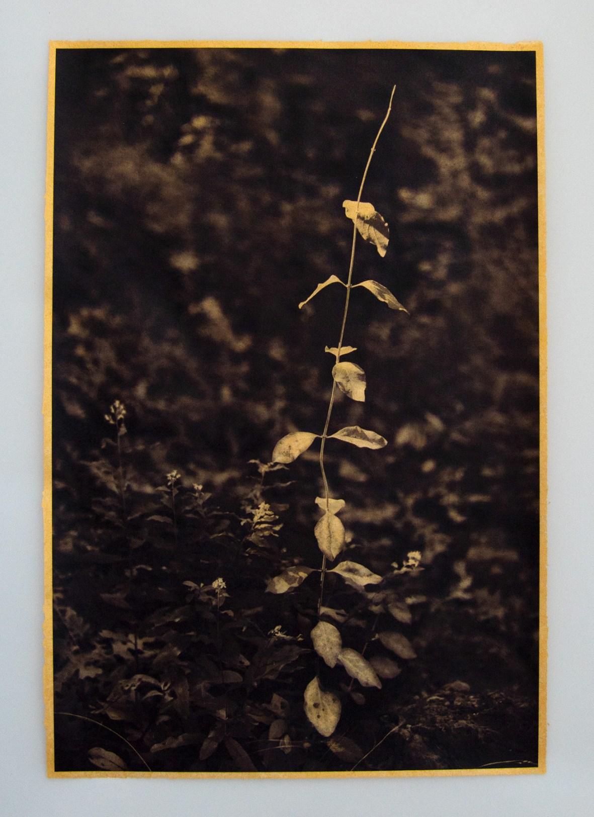 New Growth © Cyd Peroni