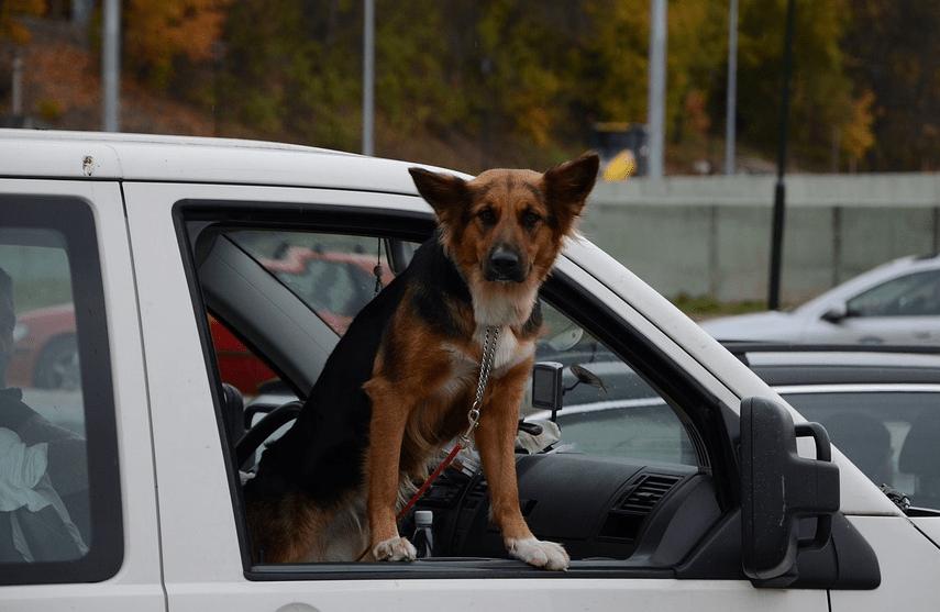 Quelle voiture choisir avec un gros chien ?