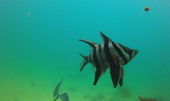 web diving1