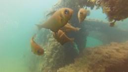 web diving4