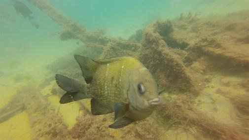 web diving5