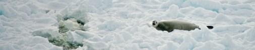 antarctica-130-of-290
