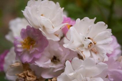 160521-the garden-004