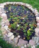 backyard-pond-water-garden-9