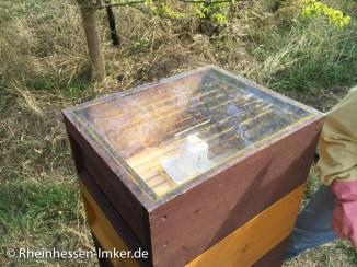 Bienen_2015-09-12_14-21-43