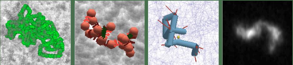 高分子の様々なモデルとDNAの直接観察画像