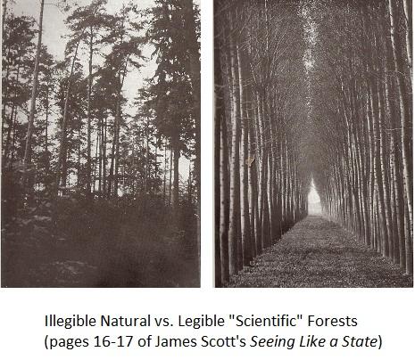 scottForestry (1)