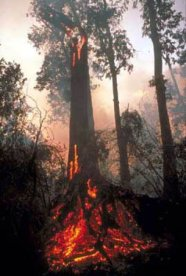 Forest_fire_in_Borneo (www esa int)