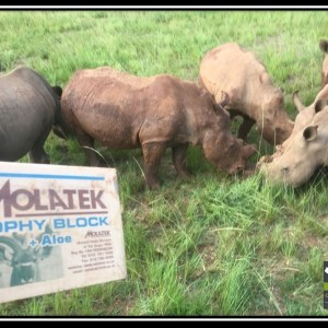 Molatek Trophy Block