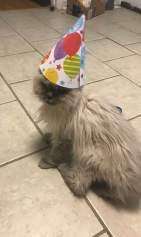 He was never too old to party