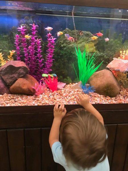 fish! wadda!
