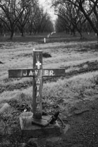 Javier Ayala, Highway 99