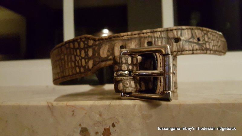 Brustgeschirr oder Halsband für den Rhodesian Ridgeback