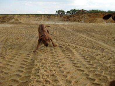 i-Unsere Rhodesian Ridgebacks spielen in der Sandkuhle, Bandele Bathani und Actor Aartijn.