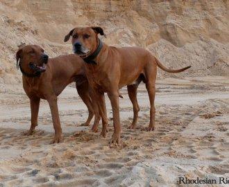 rhodesian-ridgeback-kennel-tussanganambey-n-der-tag-des-hundes-2013