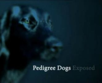 pedigree-dogs-exposed