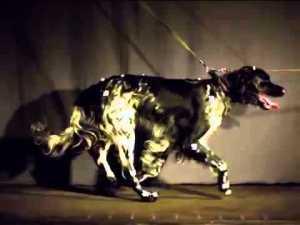 rhodesianridgeback-bb.de/2013/06/25/dogs-in-motion-05-the-german-kennel-club-vdh/