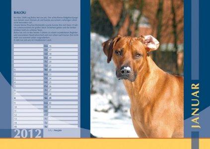 Der Ridgeback in Not Kalender 2012