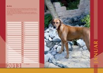 Der Ridgeback in Not Kalender