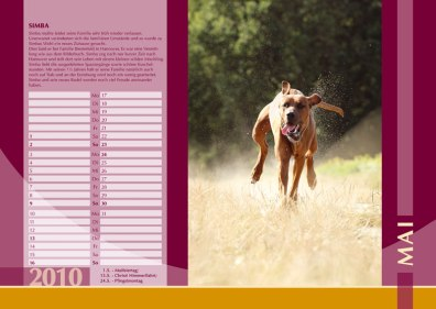 Der Ridgeback in Not Kalender 2010