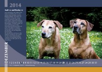 Der Ridgeback in Not Kalender 2014
