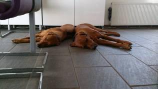 Hundeküche -Hundeeis
