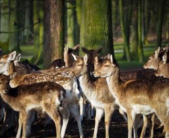 Jagdzeiten in Deutschland (Bundesregelung) und Anmerkungen zu Jagdzeiten und Schonzeiten