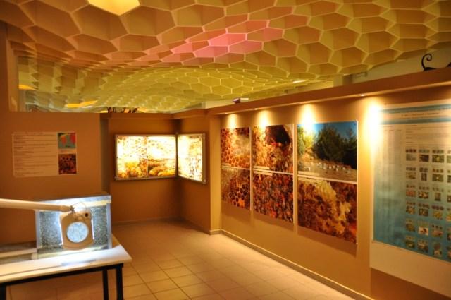 Intérieur du musée de l'abeille