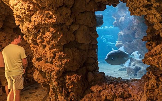 interieur aquarium rhodes