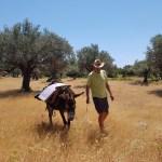 Activité à Rhodes: balade en ane à rhodes