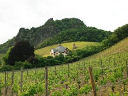 Weinberge in Rhöndorf
