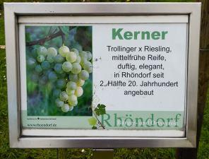 Lehrweinberg Rhöndorf