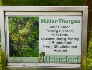 Informationstafel: Müller-Thurgau