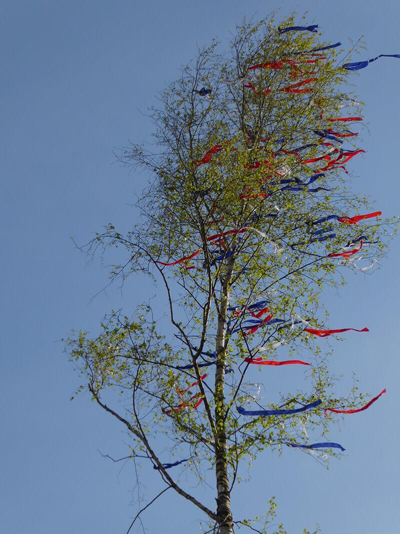 Maiansingen 2017 Der Maibaum steht und die Bänder flattern im Wind