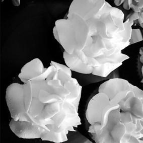 Sugar Flower - Buttercream Roses