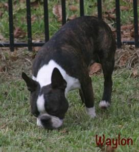 WaylonB
