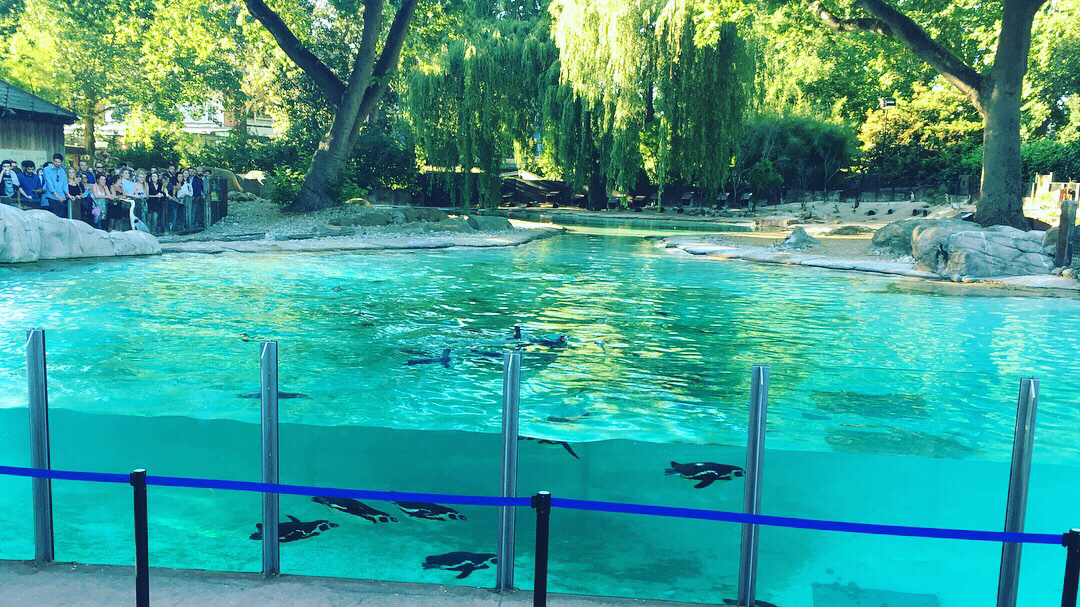 The penguins at London Zoo