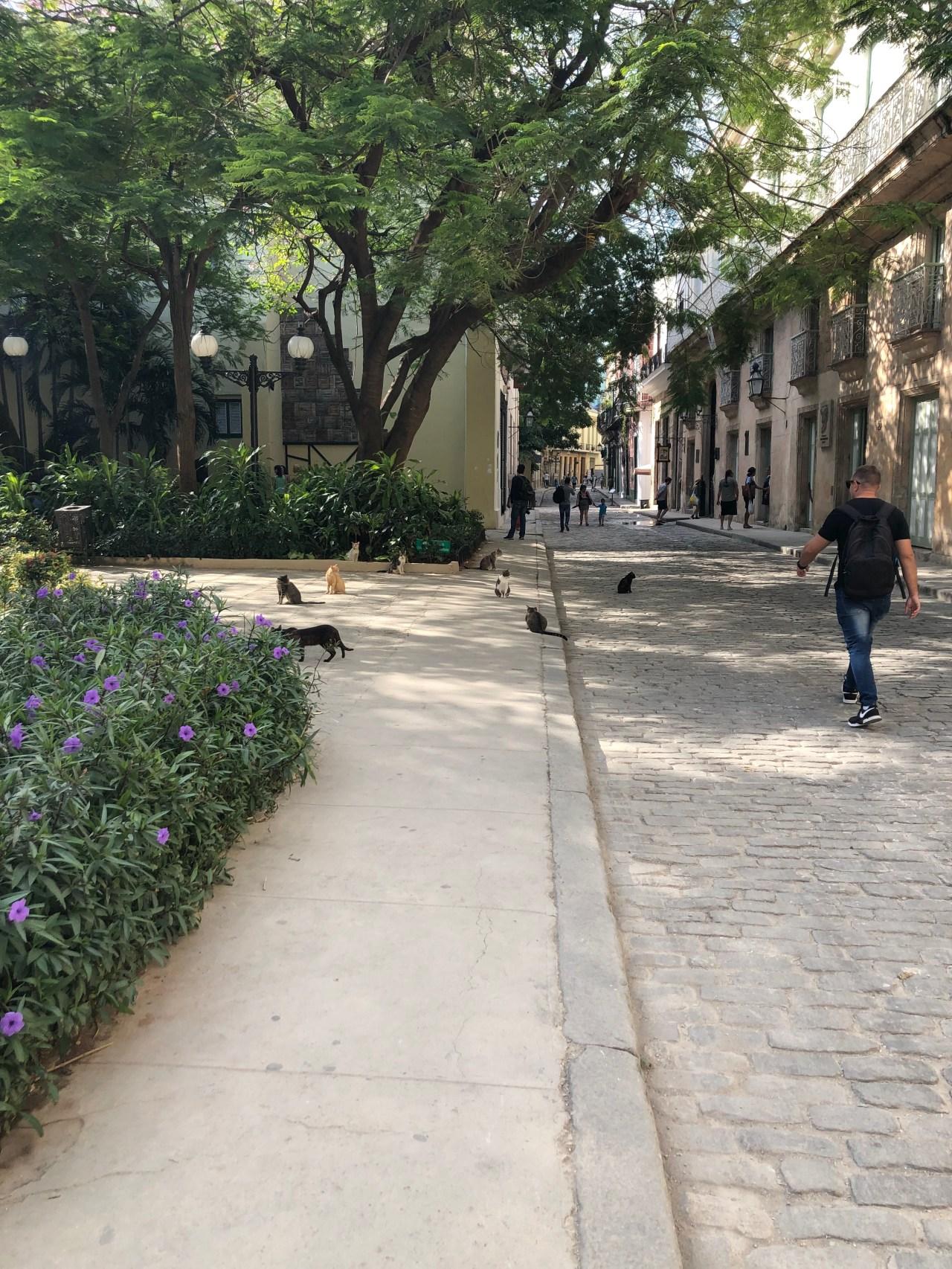Square full of Cats Havana
