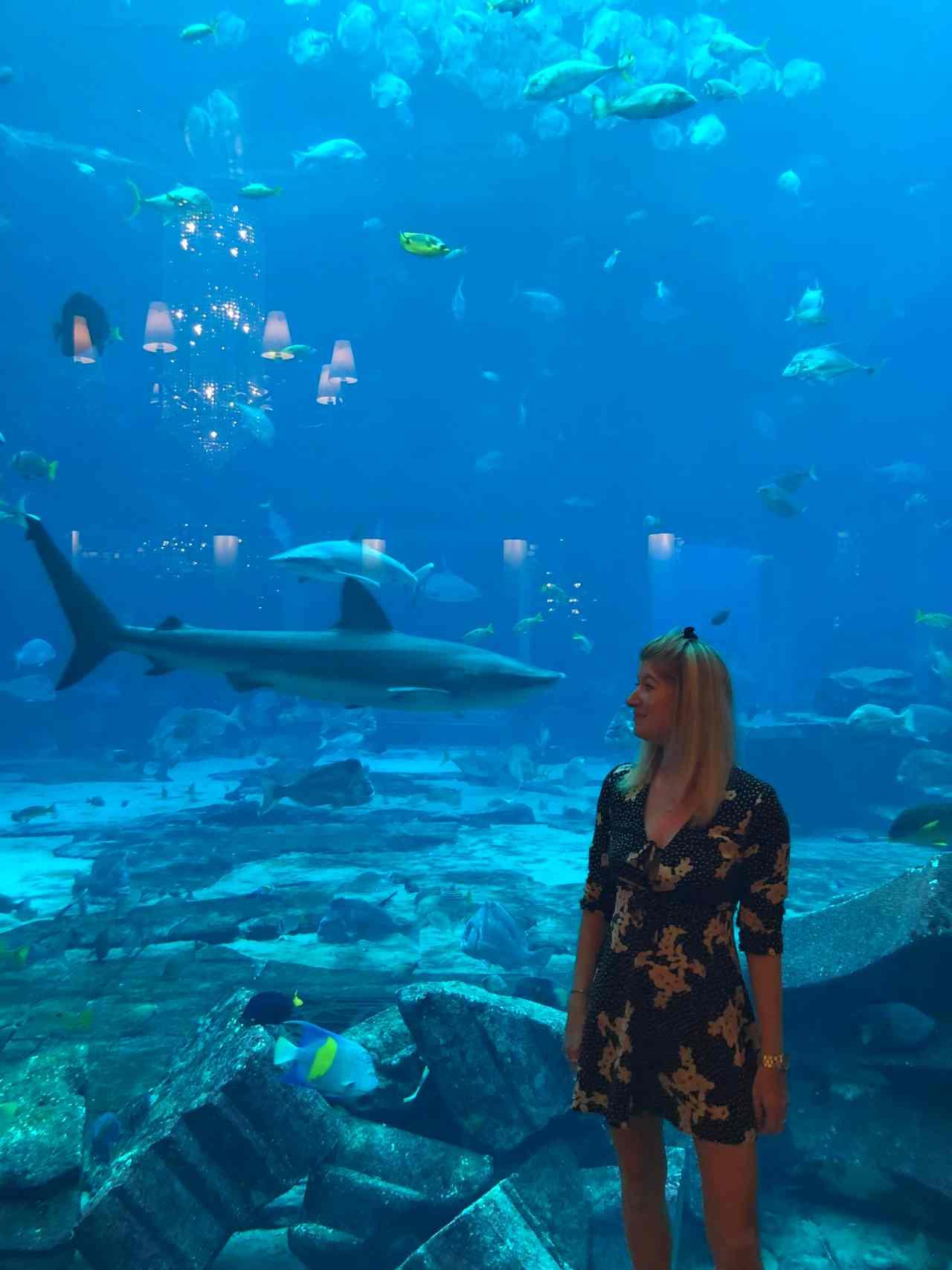 shark ossiano dubai