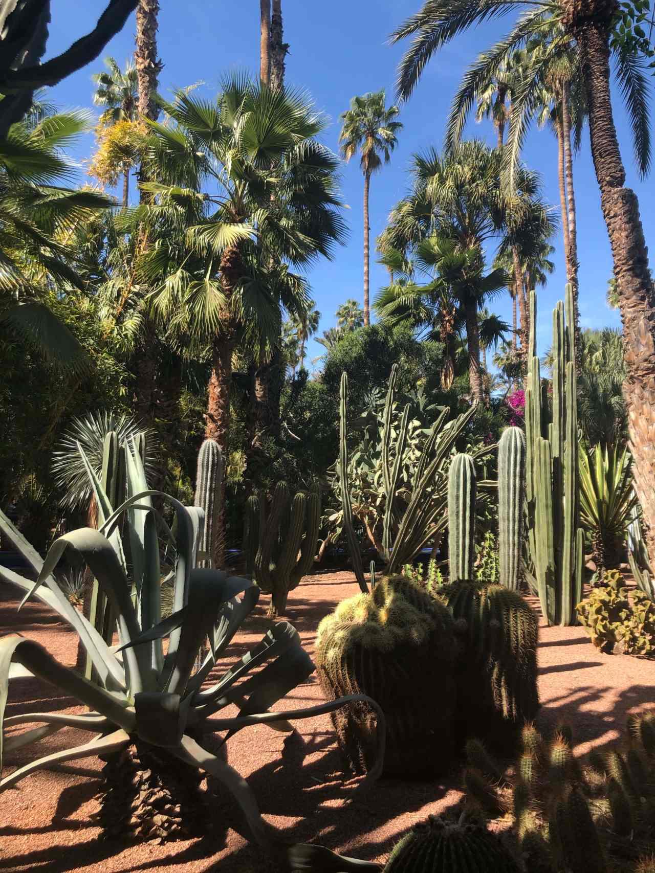 Multiple cacti at Le Jardin majorelle