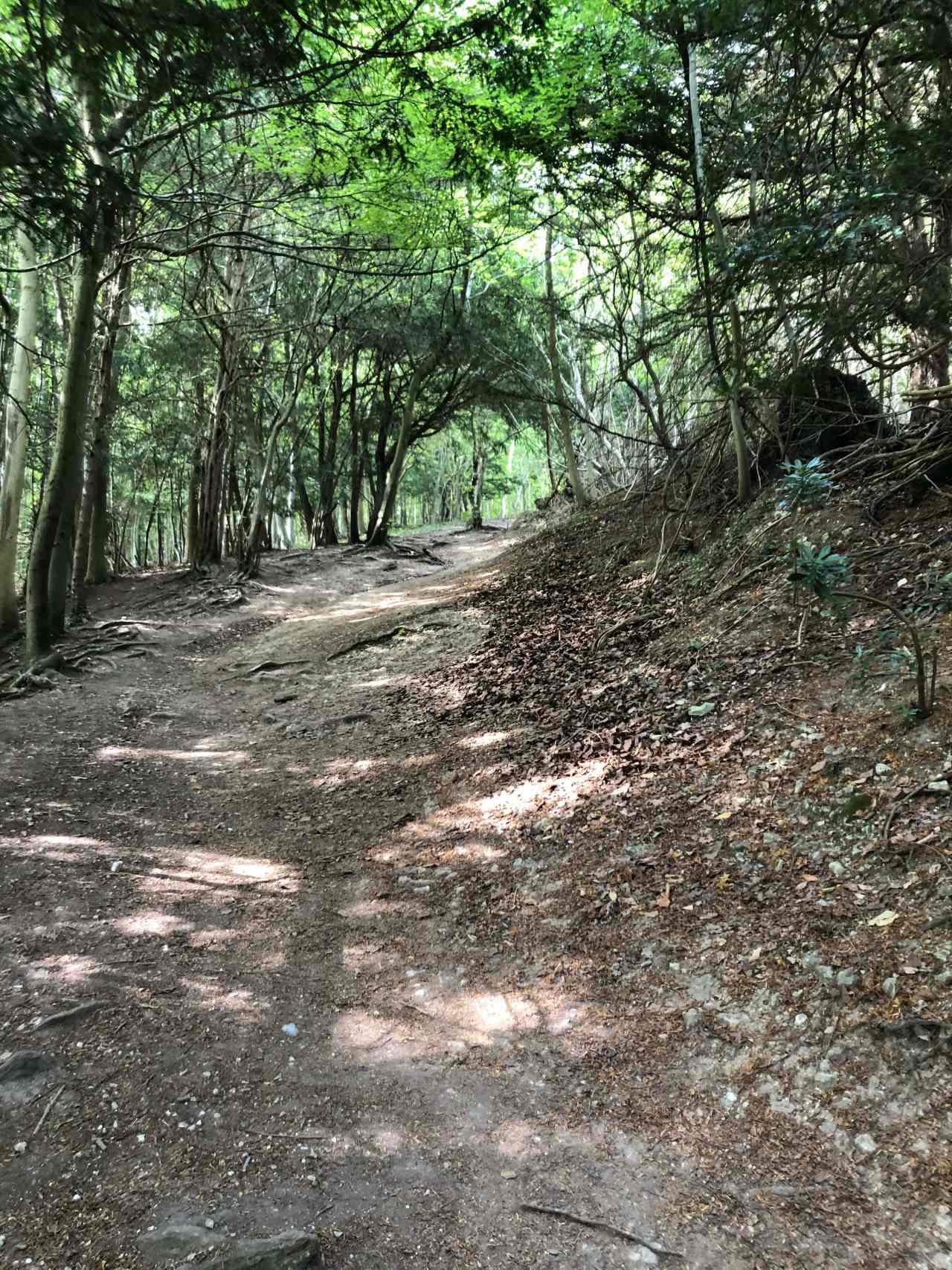 Box Hill Hike wood