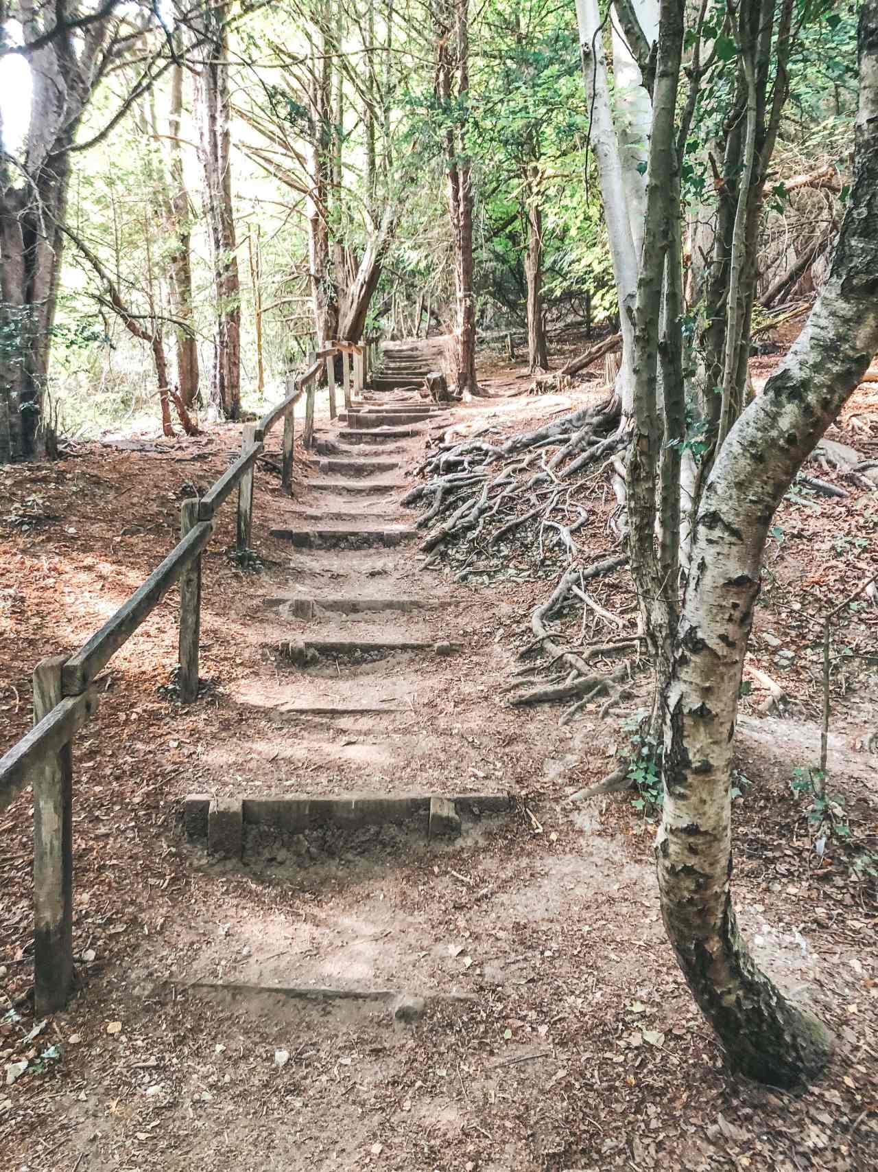 woodland path box hill hike